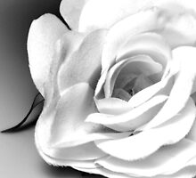 The Silk Rose by Sherry Hallemeier