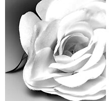 The Silk Rose Photographic Print