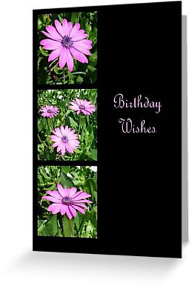 Birthday Wishes Greeting with Pink Daisies by taiche