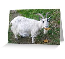 Hungry goat Greeting Card