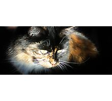 Simply Lily Cat Photographic Print