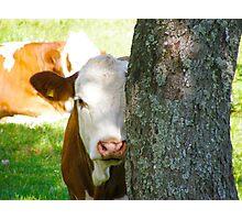 Hide & seek?? Photographic Print