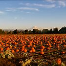 Pumpkin Field in Puyallup, Washington by JohnOdz