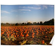 Pumpkin Field in Puyallup, Washington Poster