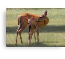 Doe with Fawn Canvas Print