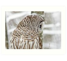 Barred Owl in Snow Art Print