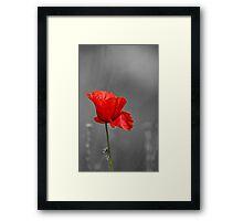Red Poppy flower selective colouring Framed Print