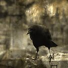 Dark And Angry Crow by gothicolors