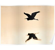 Great Blue Heron over water Poster