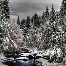 Fresh Snow On Upper Sharps Creek by Charles & Patricia   Harkins ~ Picture Oregon