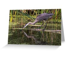Reflection of a Great Blue Heron Greeting Card