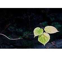 Just Around the Corner Photographic Print