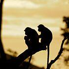 wild life by 1EddiejrAlvarez