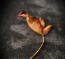 ..talk to me about the days of yore...(Fallen Leaf, Stanley Park, Vancouver, Canada) by Russ Styles