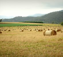 Tableland Farmland by Vanessa Barklay