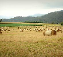 Tableland Farmland by Vanessa Barklay