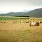 Aussie Farm Life! $20 RB Voucher Challenge