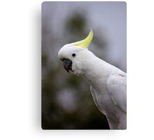 Who's a pretty boy Sulphur Crested Cockatoo Canvas Print