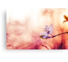 Burning blossom Canvas Print