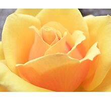 Sunkissed Apricots Photographic Print