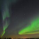 Alberta Auroras by Roxanne Persson