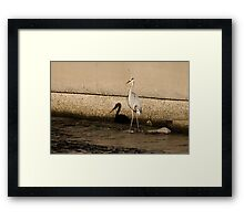 Shadow of a Great Blue Heron Framed Print
