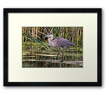 Great Blue Heron on a log Framed Print