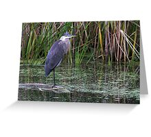 Great Blue Heron on a log Greeting Card