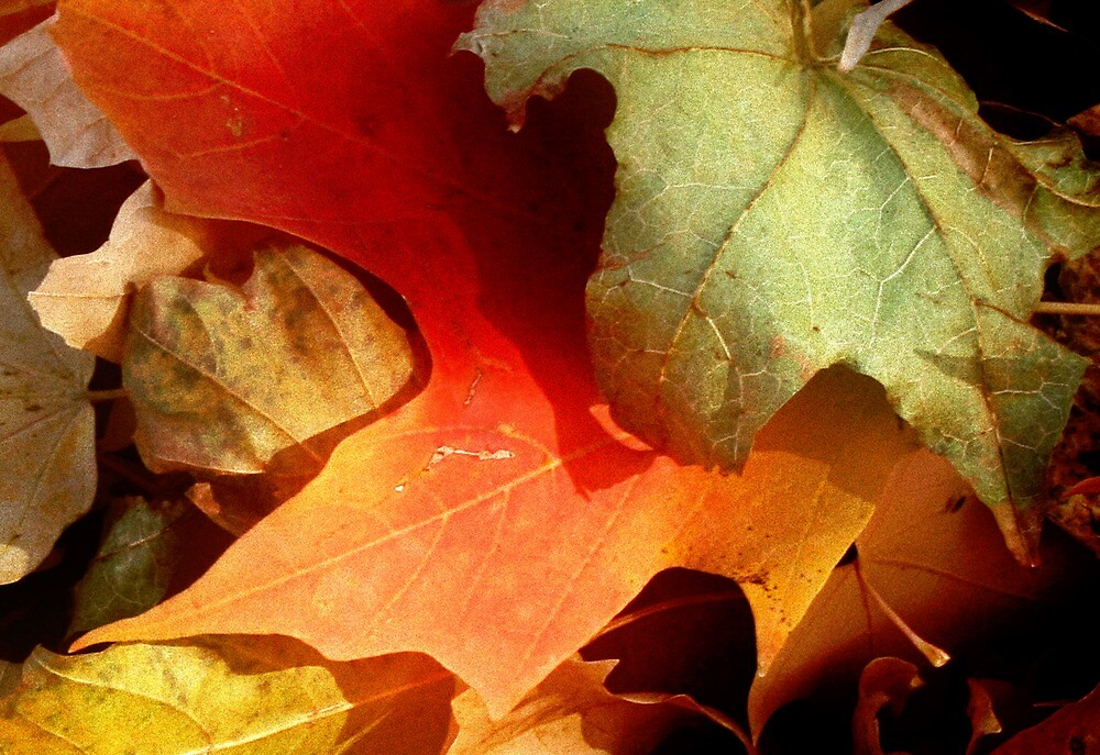 Mixed Leaves by Nadya Johnson