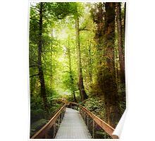 Rainforest Skywalk Poster