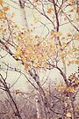 Autumn Birch by KBritt