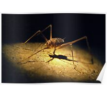 Cave Weta Poster