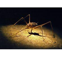 Cave Weta Photographic Print
