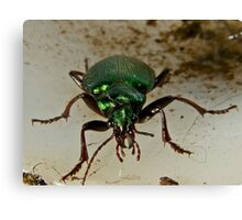 Beetle Stare down Canvas Print