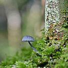Nitrous Bonnet   ,   mycena  leptocephala. by relayer51