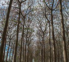 Through The Trees by Mandy  Harvey