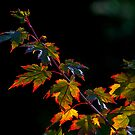 Autumn, Light and leaves by THHoang