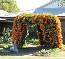 A Flowering Arch! in a garden. Mundubbera, Queensland. by Rita Blom