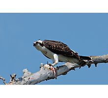 Osprey with Bullhead Photographic Print
