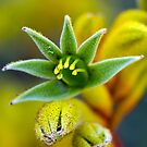 Yellow Paw by Ladyshark