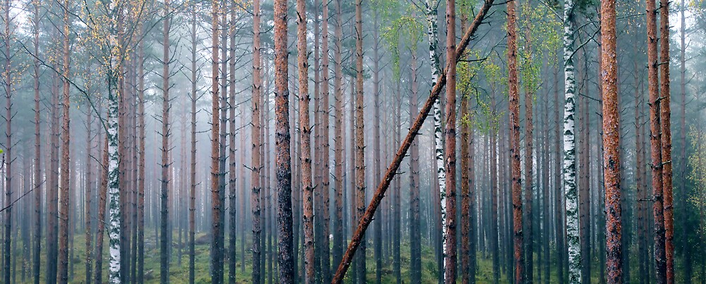 9.10.2012: Autumn in the Forest I by Petri Volanen