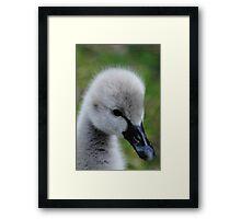 Baby Swans aka Cygnets #2 Framed Print