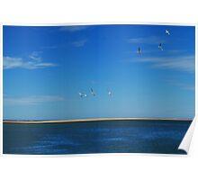 Wheeling free over the sea - Inverloch, Victoria Poster