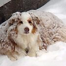Lindy loves snow by Heidi Mooney-Hill