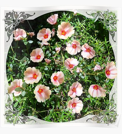 Pinky Posies Poster