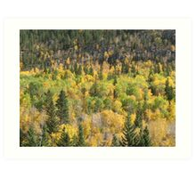 Fall Colors Spearfish Canyon Art Print