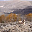 Roaming Free in the Rockies by Kate Purdy