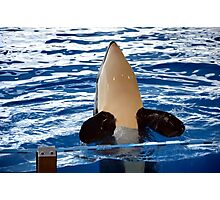 Orca Whale show Photographic Print