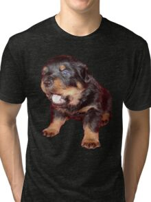 Rottweiler Puppy Isolated On Black Tri-blend T-Shirt
