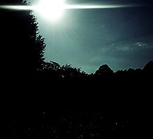 Late Afternoon Sun by Sanguine